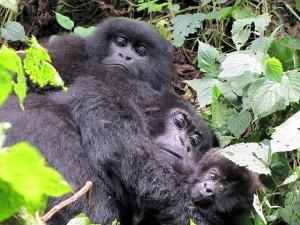 https://www.art1a1d.com/wp-content/uploads/2017/07/Congo-13.jpg