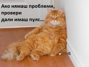 https://www.art1a1d.com/wp-content/uploads/2017/07/Lazy-cat1.jpg